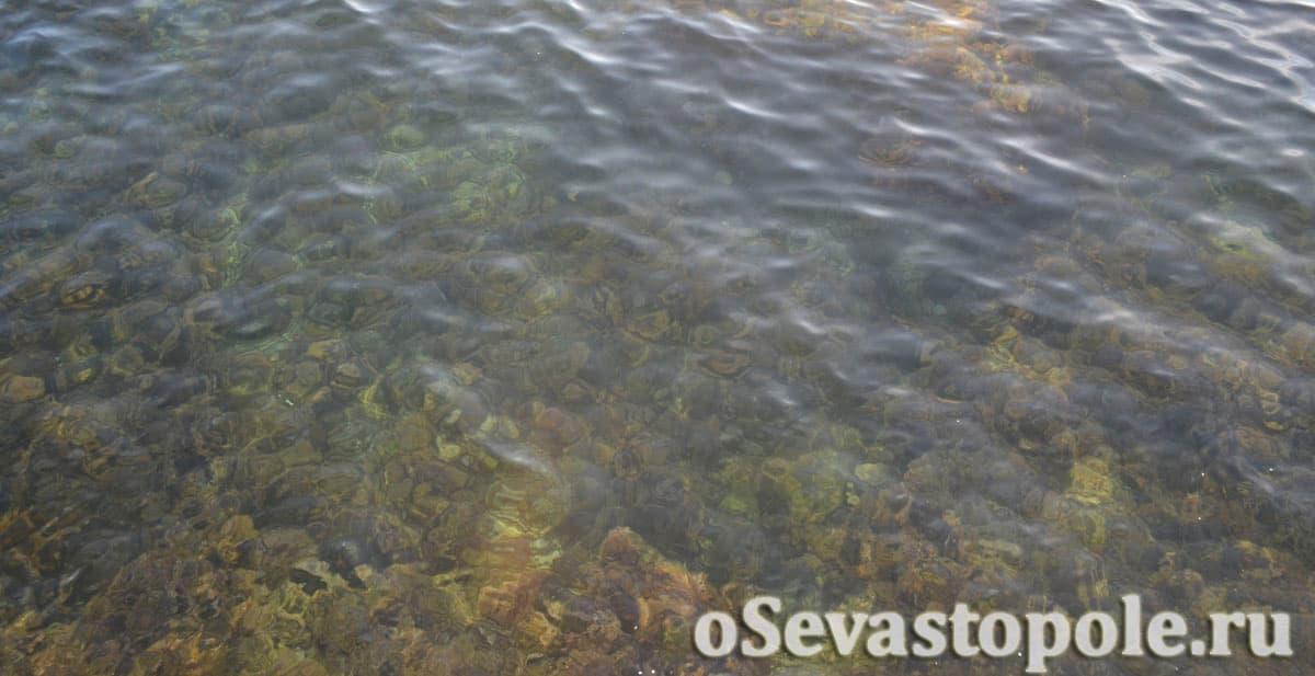 Морское дно на пляже Парк Победы в Севастополе