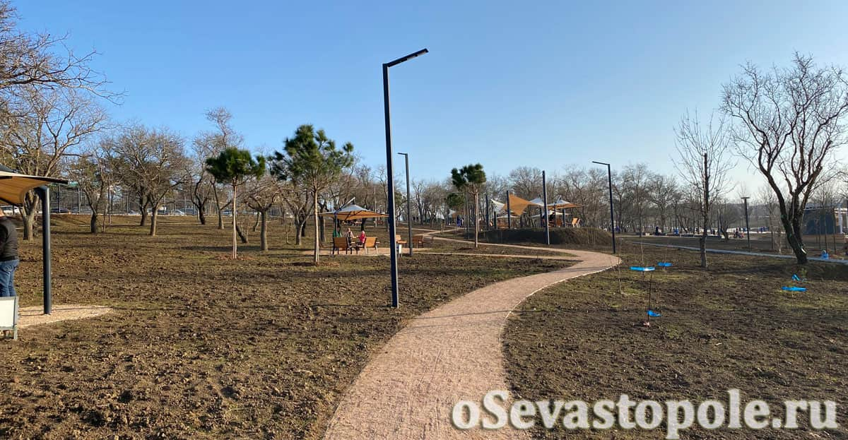 Высаженные деревья в парке Учкуевка в Севастополе