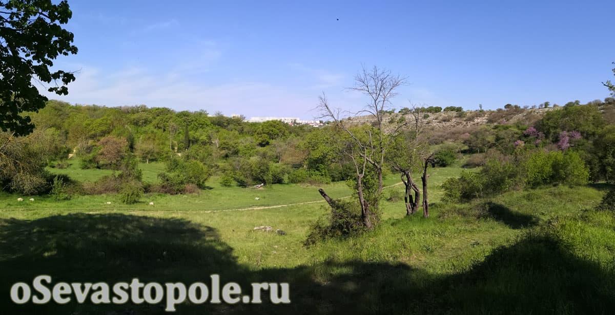 Максимова дача Севастополь фотография