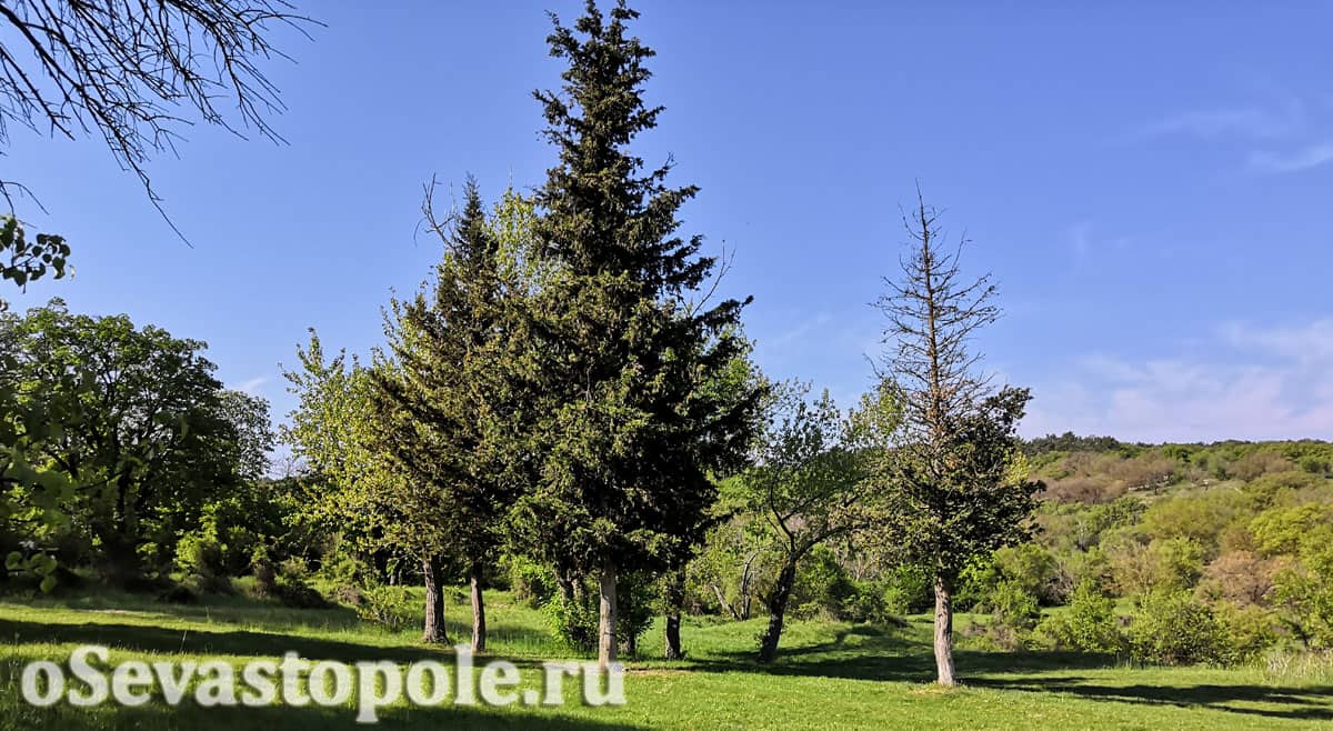 Парк Максимова дача Севастополь