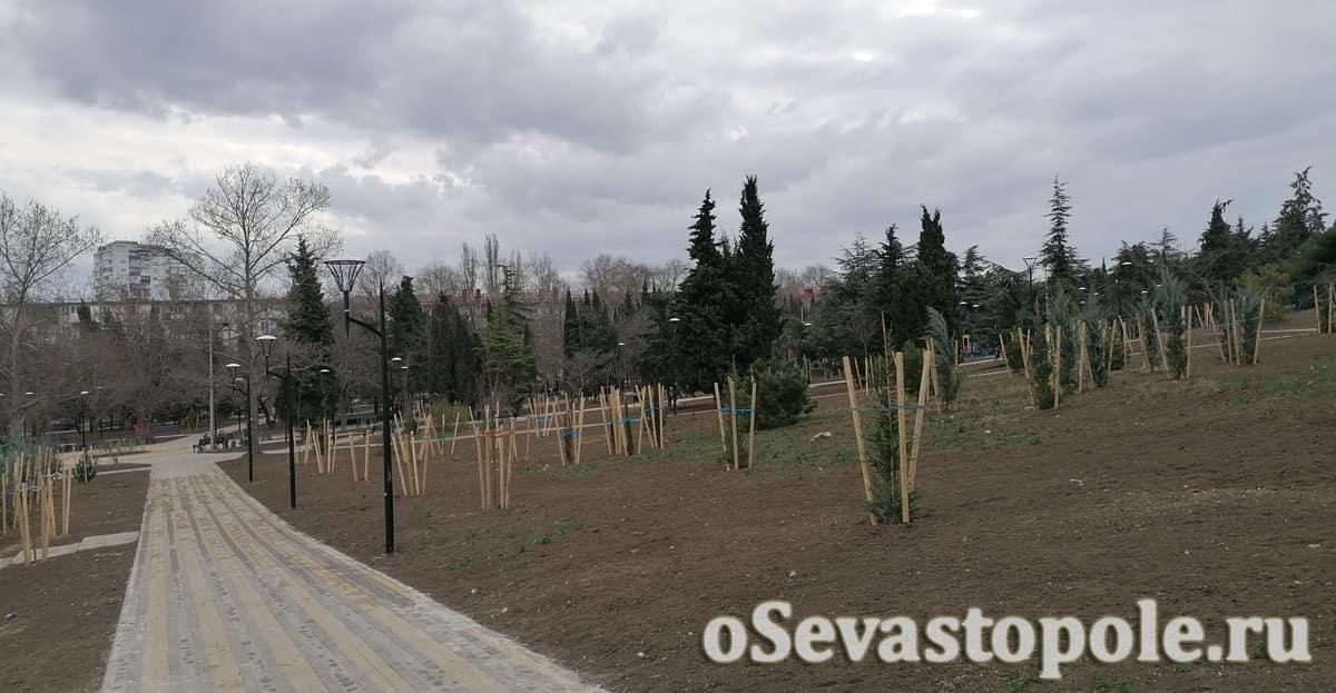 Высаженные деревья в сквере Севастопольских курсантов